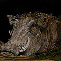 Warthog by Tracey Beer