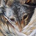 Watchful Rest -close-up Detail by Elena Kolotusha
