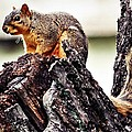 Watchful Squirrel by KayeCee Spain