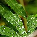 Water Drops by Ernestas Papinigis