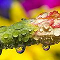 Water Drops On A Budding Flower by Craig Tuttle