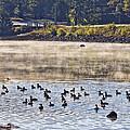 Water Fowl At Lake Wilhelmina Arkansas by Douglas Barnard