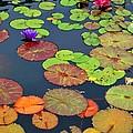 Water Lilies I by Nancy Mueller