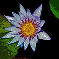 Water Lilly Paint by Steve McKinzie