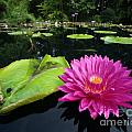 Water Lilly Pond by Frank Boellmann