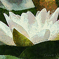 Water Lily by Clare VanderVeen