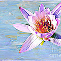 Water Lily by Judi Bagwell