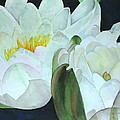 Water Lily by Mary Kay Holladay