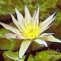 Water Lily by Odon Czintos