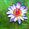Water Lily Study by Judi Bagwell