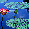 Water Lily by TB Sojka