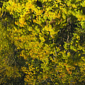 Water Reflection Abstract Autumn 1 F by John Brueske