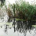 Water Reflection by David Resnikoff
