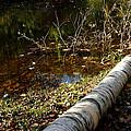 Water Seeing by LeeAnn McLaneGoetz McLaneGoetzStudioLLCcom