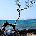 Water Sports In Hawaii by Karen Nicholson