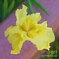 Watercolor Iris by L J Oakes