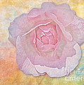 Watercolor Rose by Susan Candelario