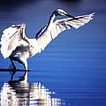Waterdancer by Alistair Lyne