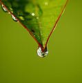 Waterdrop by David Weeks