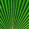 Waterdrops On Palm Leaf by Werner Lehmann