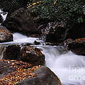 Waterfall In Fall by Cindy Manero