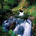 Waterfall In The Woods, Ireland by The Irish Image Collection