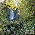Waterfall Of Vaucoux. Puy De Dome. Auvergne. France by Bernard Jaubert