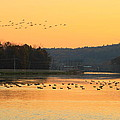 Waterfowl At Turners Falls Canal by John Burk