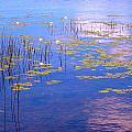 Waterlilies by Sarah Gayle Carter