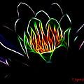 Waterlily Fractal by Lynne Jenkins