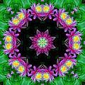 Waterlily Kaleidoscope by Lynne Jenkins