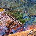 Watery Shadows by Rrrose Pix