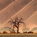Wave Tree by Alistair Lyne