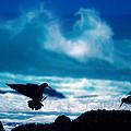 Wavedance by Alistair Lyne