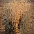 Waves Of Grass by Donna Greene