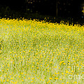 Waves Of Yellow by Kim Henderson