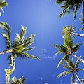 Waving Palm Trees by Dave Fleetham