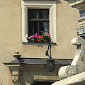 Wawel Flower Box And Achitecture by Greg Matchick