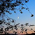 Waxing Crescent Moon by Will Borden