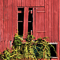 Weathered Broken Red Barn Window Of New Jersey by David Letts
