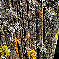 Weathered Post by Susan Herber