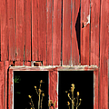 Weathered Red Barn Windows Of New Jersey by David Letts