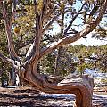 Weathered Tree by Aisha Karen Khan