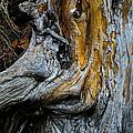 Weathered Wood by Susan Herber
