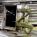 Weathered Wood Window by Carla Parris