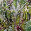 Web Design by Doris Potter