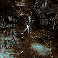 Web Glitter by Douglas Barnard