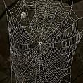 Web Master by Ron Jones