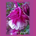 Wedding Blessings Greeting Card - Columbine Blossom by Mother Nature