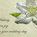 Wedding Wishes Card - White Azalea by Mother Nature